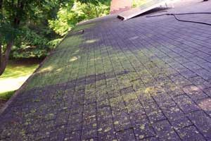 Roof with Mold and Algae